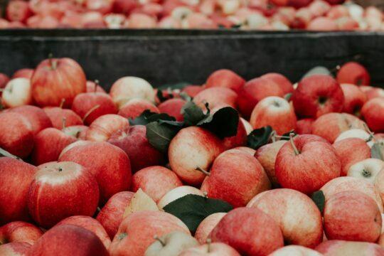 Äpfel als Basis für Apfelessig